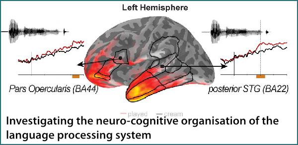 neuro-cognitive